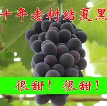 葡萄新鲜水果农家自种特产无籽夏黑绿色有机食品孕妇水果4斤包邮